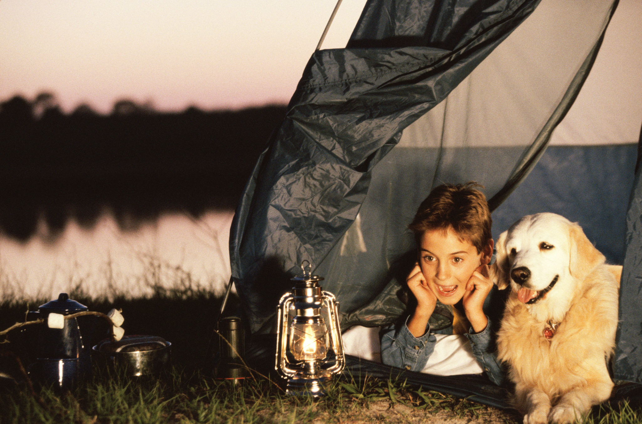 Camping with Dogs:  The Complete Safety Guide
